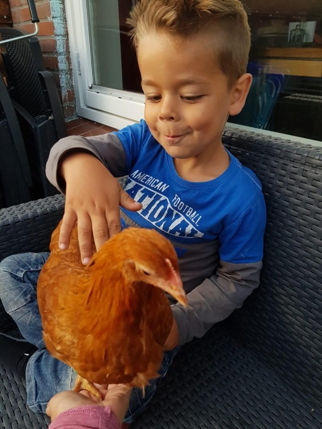 Waarom kroelen met een kat of hond als het ook net een kip kan?  © Internetbode
