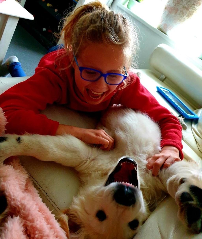Golden retriever pup Bram van bijna 9 maanden samen met Rosie.  © Internetbode