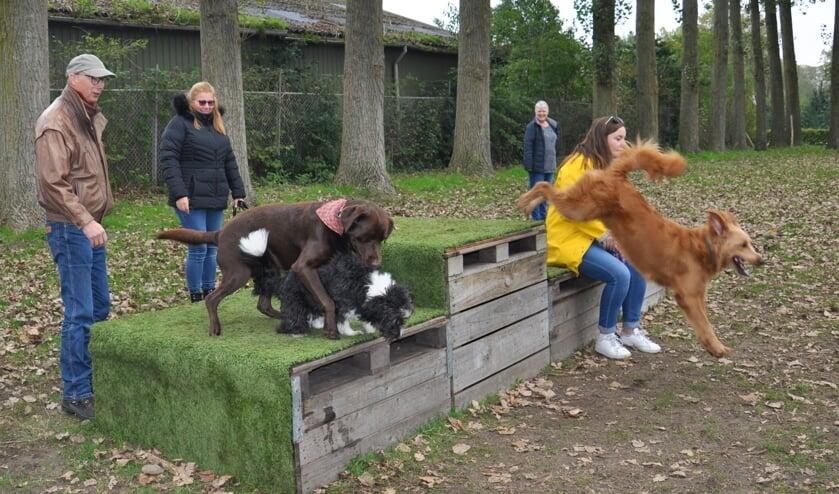 <p>De drie initiatiefnemers omringd door spelende honden.&nbsp;</p>