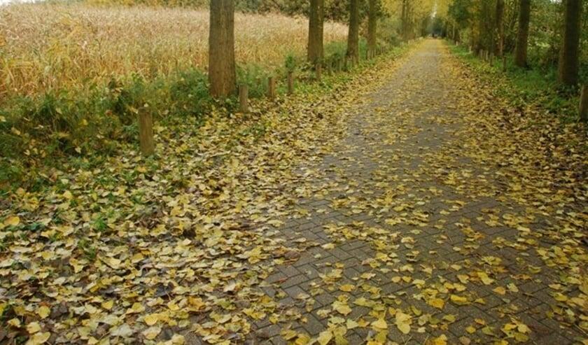 De bladeren beginnen te verkleuren en te vallen. Dat levert nu het nog rustig herfstweer is mooie plaatjes op.