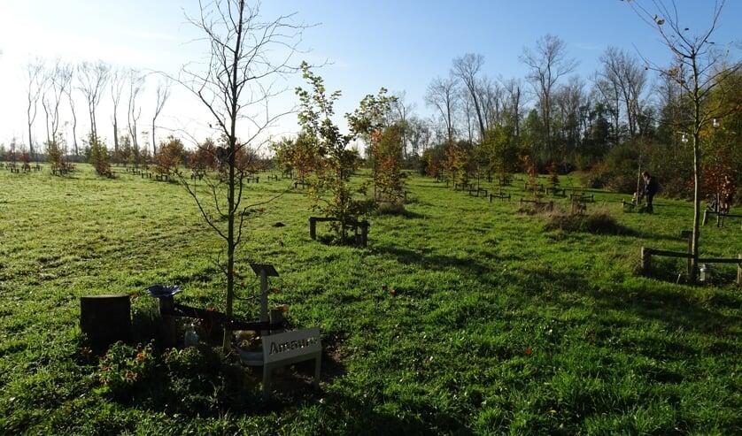 <p>Het Bos van de Toekomst tussen Kapelle en Goes.</p>