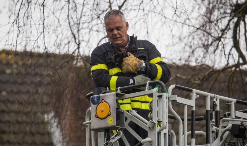 De brandweer wist de kitten te bevrijden.