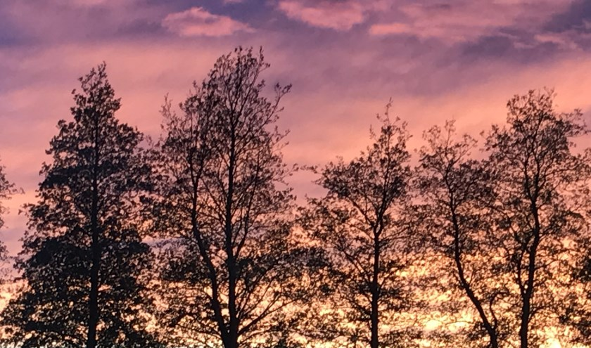 Bomen bij voetbalveld Virtus met als achtergrond een magische lucht
