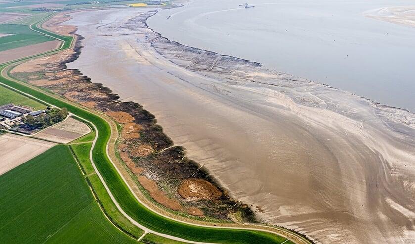 Schorren aan de oever van de Westerschelde beschermen de dijk bij Rilland.