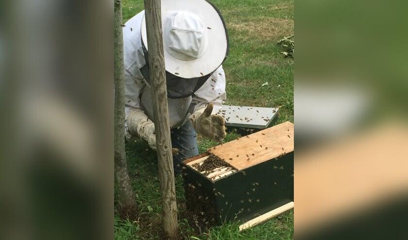 Imker Theo Hermans leidt met zachte hand de bijen naar de reiskorf.