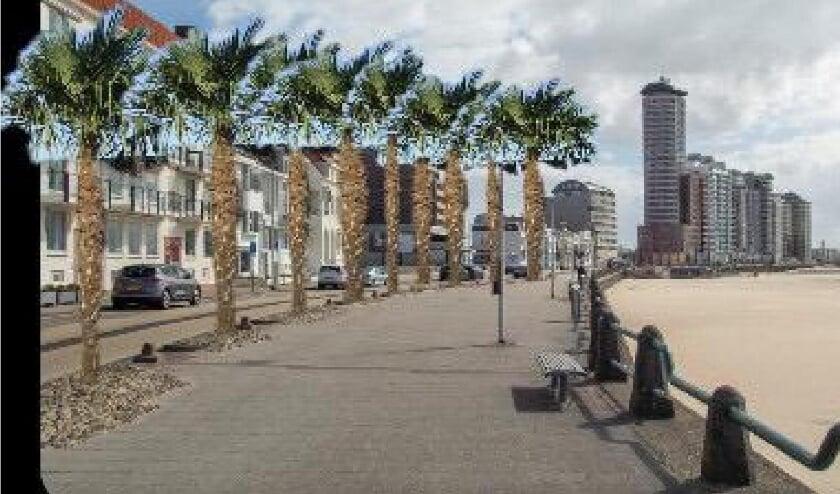 SGP Vlissingen pleit voor palmbomen op de boulevard.