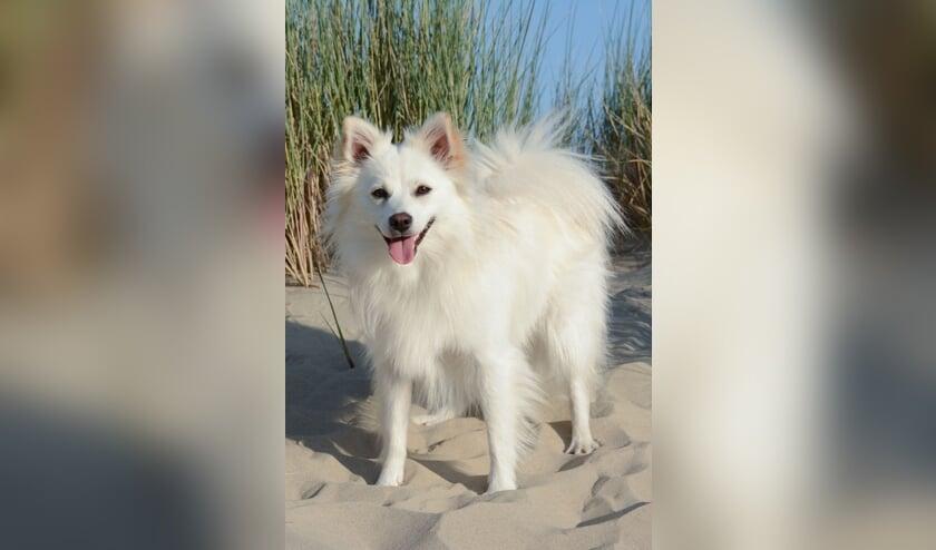 Blizzy is het mooiste hondje van Zeeland.