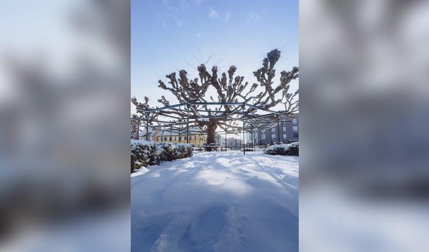 <p>De Moeierboom in de sneeuw.</p>