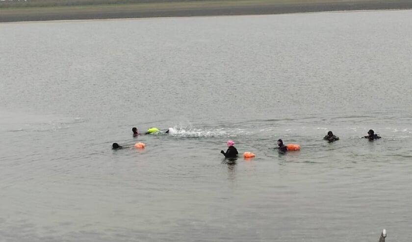 <p>Zilvermeeuw in de Oosterschelde, en een 2-tal duikers.</p>