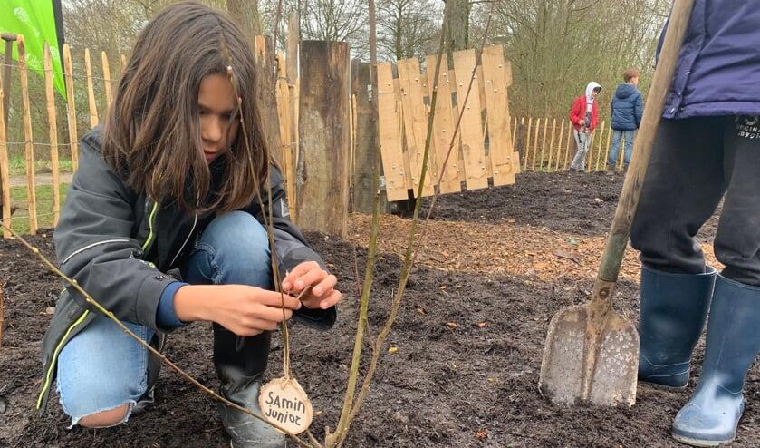 <p>Leerling Samin plant zijn boom genaamd &#39;Samin Junior&#39;</p>